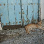 Katze in Frigiliana